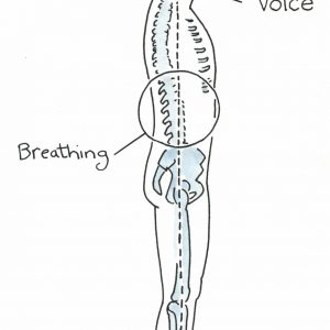 Seminar – Advanced Anatomy of Breath and Balance​<br/>Wed 20.05.20 | 2 – 5pm